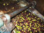 That's how we make olive oil